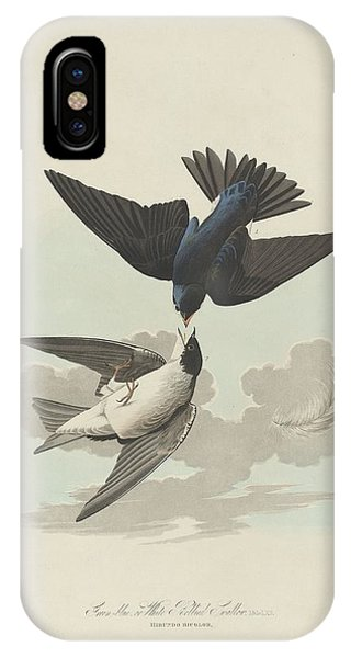 Green-blue Or White-bellied Swallow IPhone Case