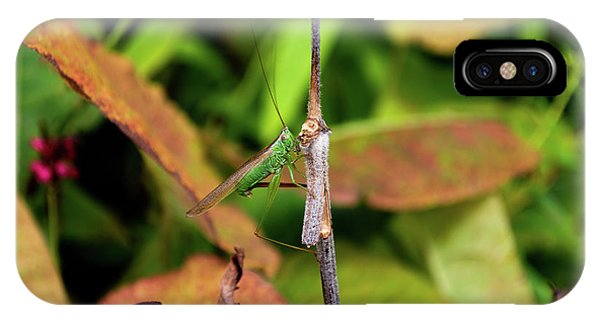 IPhone Case featuring the photograph Green Conehead Cricket Holding Twig by Scott Lyons