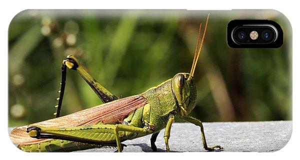 Green Grasshopper IPhone Case