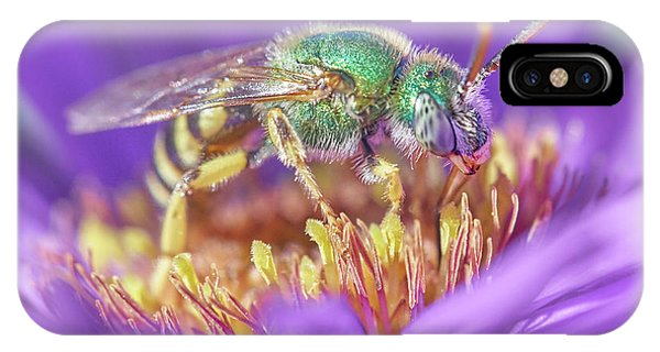 Green Halactid Bee On Purple Aster IPhone Case