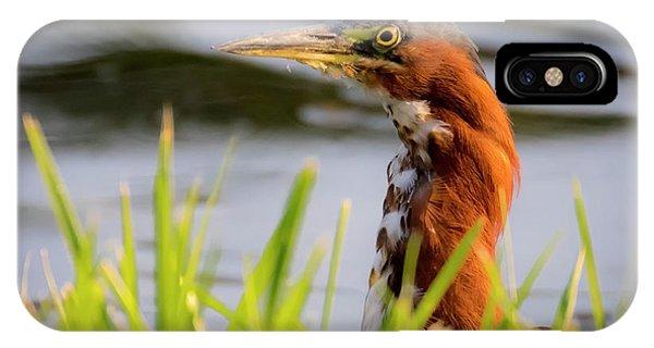 Green Heron Closeup  IPhone Case