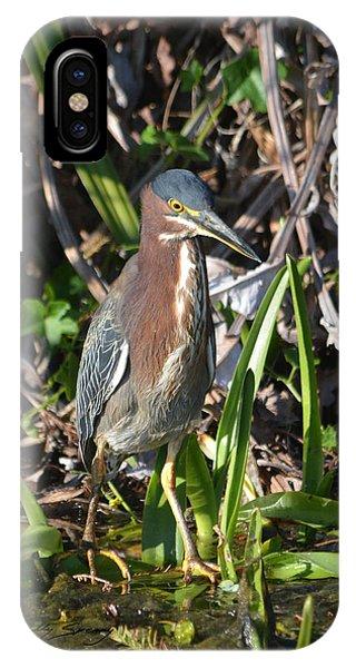 Green Heron Everglades IPhone Case