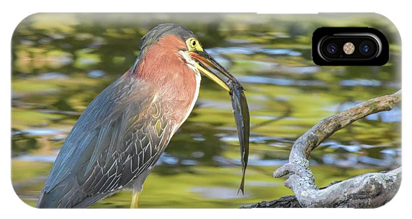 Green Heron With Fish IPhone Case