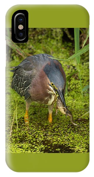 Green Heron With Prey IPhone Case