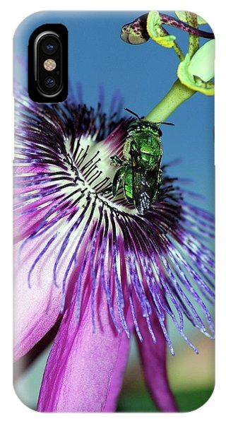 Green Hover Fly On Passion Flower IPhone Case
