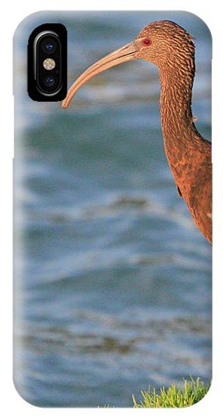 Green Ibis 4 IPhone Case