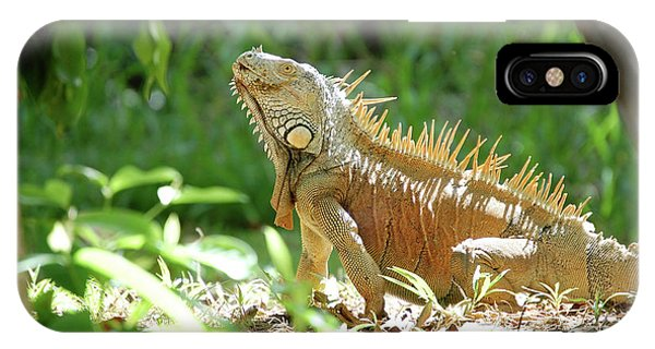 IPhone Case featuring the photograph Green Iguana, Iguana Iguana by Breck Bartholomew