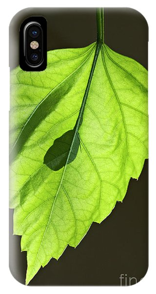 iPhone Case - Green Hibiscus Leaf by Tony Cordoza