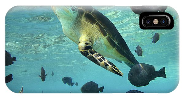 IPhone Case featuring the photograph Green Sea Turtle Balicasag Island by Tim Fitzharris