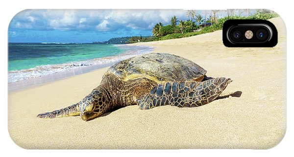 Green Sea Turtle Hawaii IPhone Case