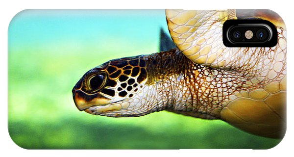 Reptiles iPhone Case - Green Sea Turtle by Marilyn Hunt