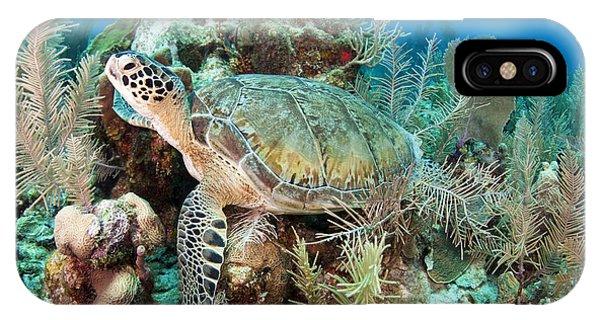 Sea Floor iPhone Case - Green Sea Turtle On Caribbean Reef by Karen Doody