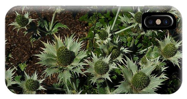 Green Thistles In Botanical Garden Of Bern IPhone Case