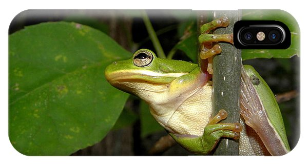 Green Tree Frog II Phone Case by Griffin Harris