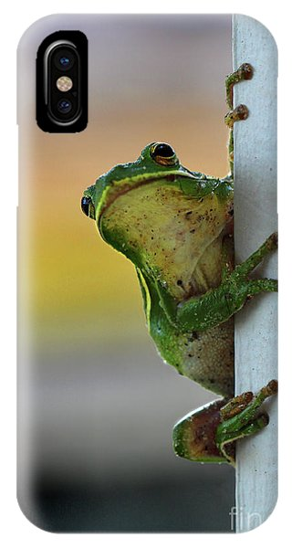 Green Tree Frog  It's Not Easy Being Green IPhone Case