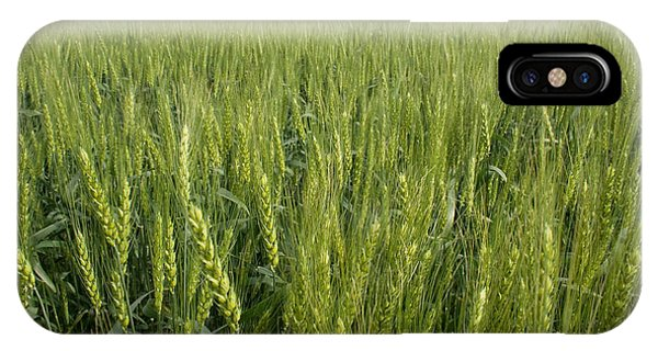 IPhone Case featuring the photograph Green Wheat by Dylan Punke