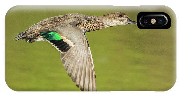 Green-winged Teal 6320-100217-2cr IPhone Case