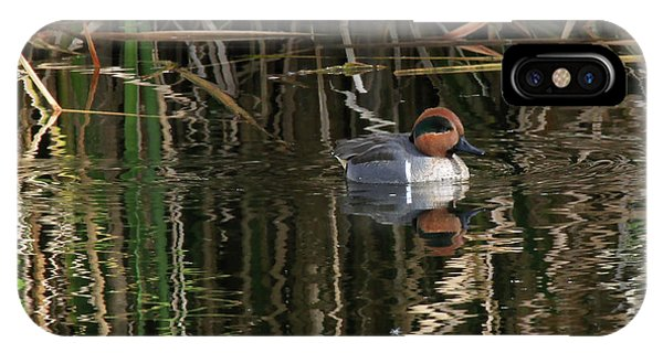 Green Winged Teal  IPhone Case