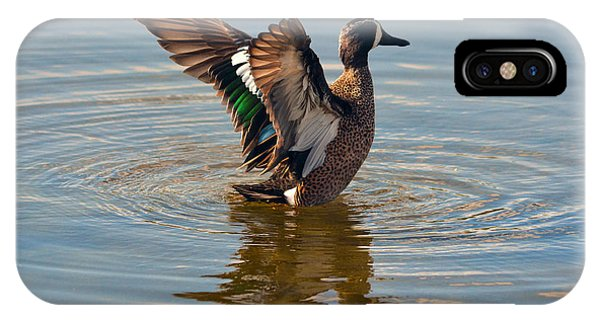 Blue Winged Teal IPhone Case