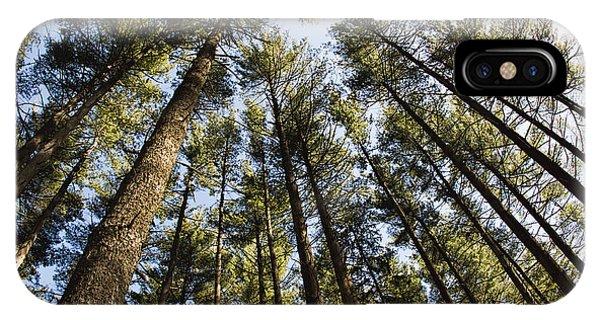 Greenbank Pines IPhone Case
