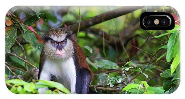Grenada Monkey 2 IPhone Case