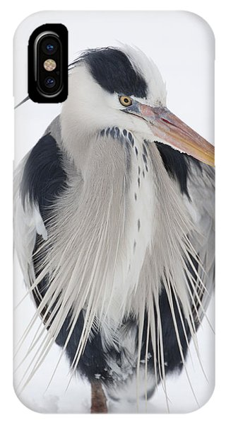 Grey Heron In The Snow IPhone Case