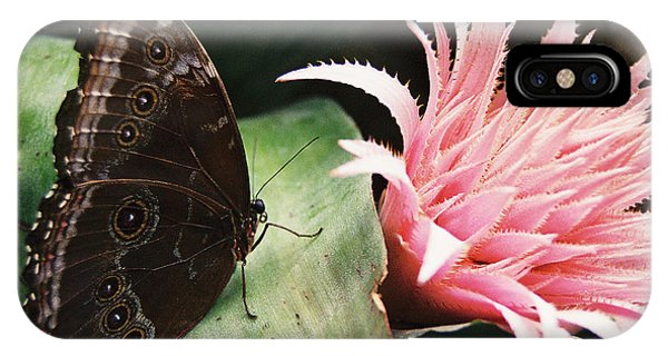 Grey Pansy Pink Bromeliad IPhone Case