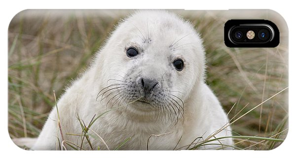 Grey Seal Pup IPhone Case