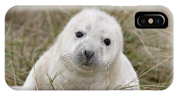 Grey Seal Pup IPhone Case