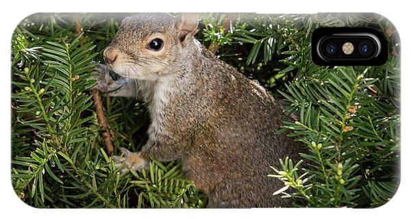 Grey Squirrel IPhone Case