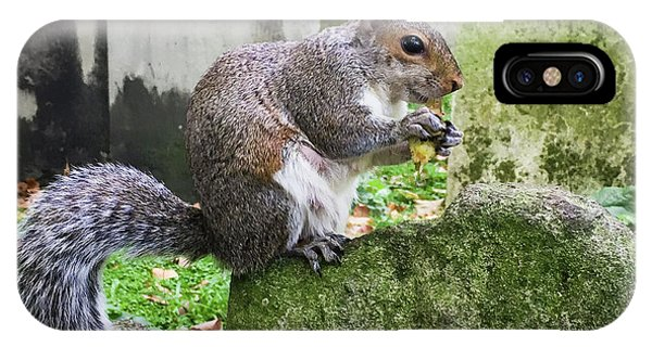 IPhone Case featuring the photograph Grey Squirrel  by Geoff Smith
