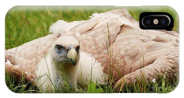 IPhone Case featuring the photograph Griffon Vulture by Nick Biemans