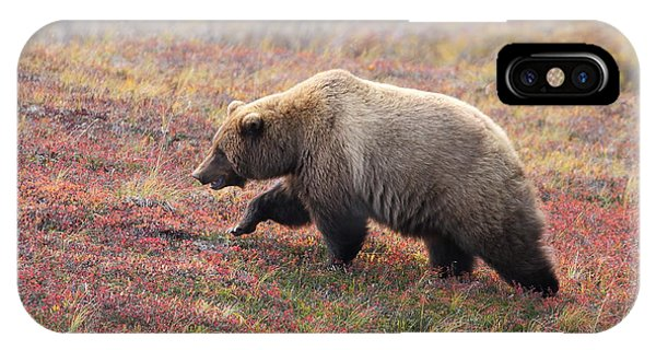 Grizzly At Denali National Park IPhone Case