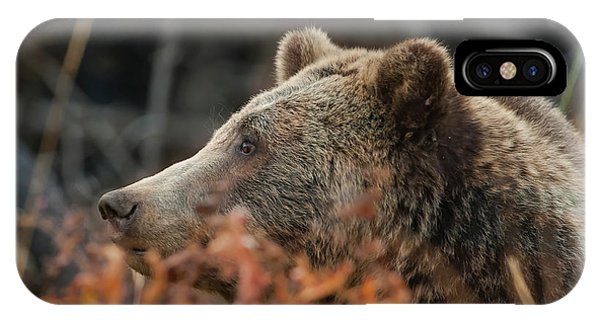 Grizzly Bear Portrait In Fall IPhone Case
