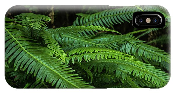 Grizzly Creek Redwoods Ferns Phone Case by Blake Webster