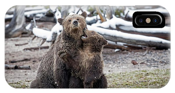 IPhone Case featuring the photograph Grizzly Cub Playing With Mother by Scott Read