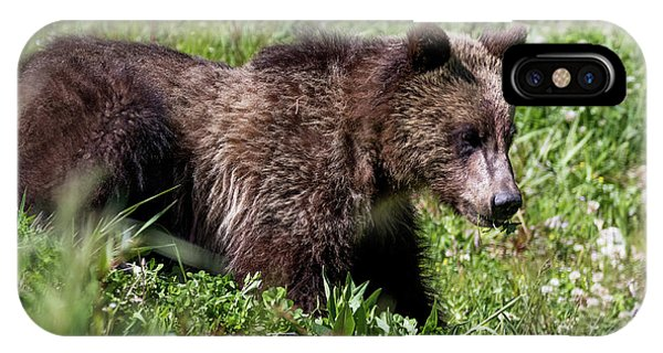 Grizzly Cub  IPhone Case