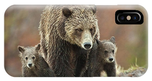 Grizzly Family IPhone Case