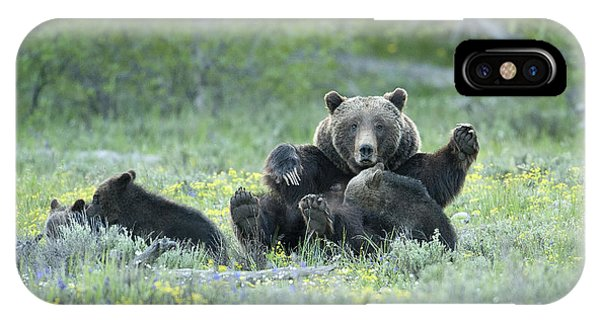 Grizzly Romp - Grand Teton IPhone Case
