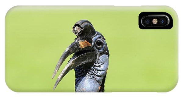 Ground Hornbill IPhone Case