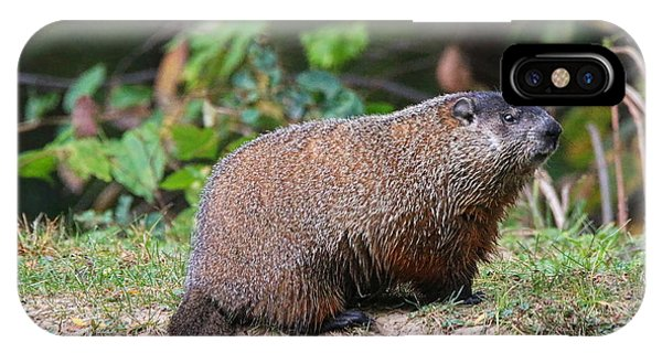 Groundhog iPhone Case - Groundhog  0590 by Jack Schultz