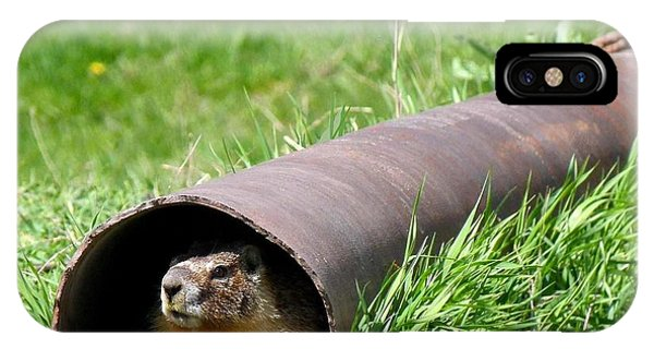 Groundhog iPhone Case - Groundhog In A Pipe by Will Borden