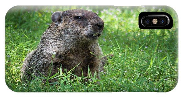 Groundhog Posing  IPhone Case