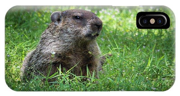Groundhog Posing  IPhone Case