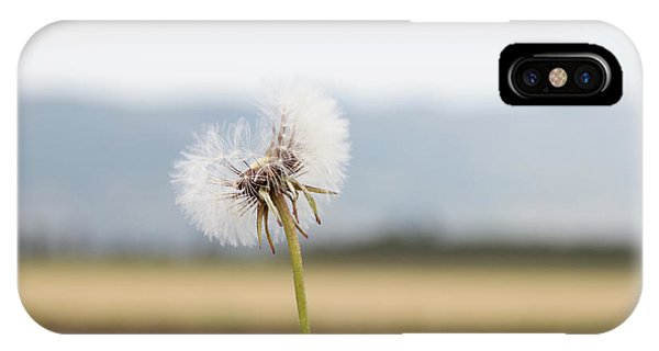 Groundsel In The Wind IPhone Case