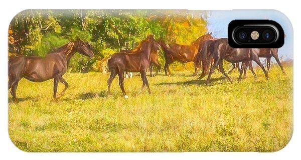 Group Of Morgan Horses Trotting Through Autumn Pasture. IPhone Case