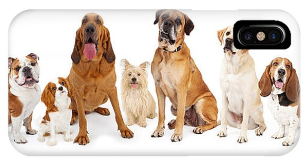 King Charles iPhone Case - Group Of Various Size Dogs by Susan Schmitz