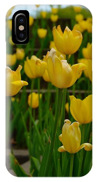 Grouping Of Yellow Tulips IPhone Case