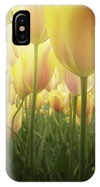 Growing  Tulips  IPhone Case