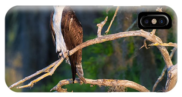 Grumpy Osprey Not Ready For Its Picture IPhone Case